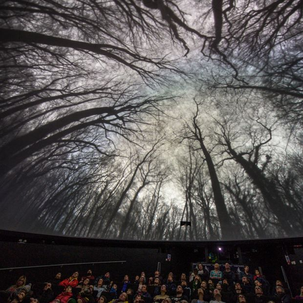 A 360 dome project of trees